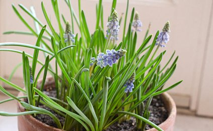 Start a spring garden indoors